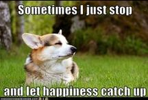 Healthy Humor / Some humor and fun pictures - laughter is good for the soul, and your overall wellness!