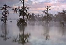 Louisiana / We love Louisiana. Conservation of the state's remarkable environment is the driving force behind Marsh Dog. www.marshdog.com