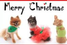 Christmas tees for dogs / Rhinestone tees for dogs.  Sizes for big and little dogs!  www.doginthecloset.com