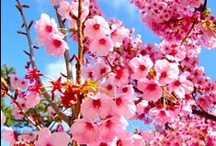 Natura meravigliosa / La natura, un grande dono, uno spettacolo di colori!!!