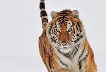 Animali bellissimi / Gli animali più belli che Dio ci ha donato
