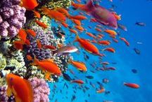 In fondo al mar / Un arcobaleno di colori...