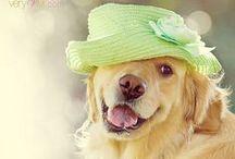 Dog / Dog