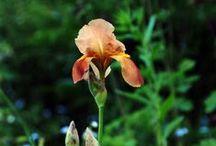 Earthcolor flowers.....