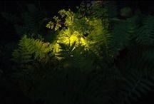 light element