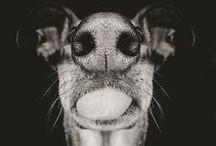 kutyik és más állatfajták :)