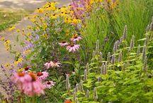 PRAIRY natural border / Piet Oudolf is the new garden!