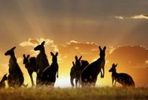 Australia / The sights, wildlife and wonder that is Australia.