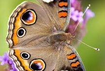 Madame Butterfly / Lei...la signora  farfalla