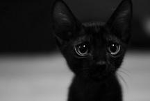 Black cats etc.