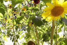 Backyard and Garden Design