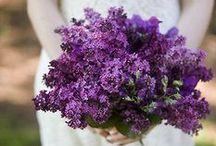Wedding: purple/lavender