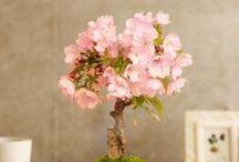 Sakura Products / 「桜」に関連するアイテムをチョイス。