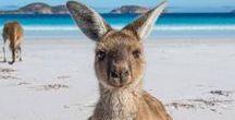 Australia Travel / Get ideas about where to travel in Australia