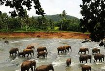 India + Sri Lanka