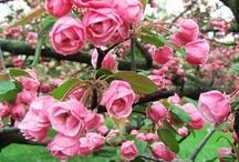 Trees in spring / by Cinta Fabra