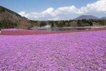 富士山 登山 / 富士山の絶景ポイント 富士山登山ルートガイド。Mount Fuji climbing route guide