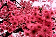 · Pink ·