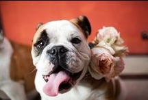 Flowergirls & Ringbearers / Flower girls, boys, dogs and more!