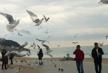 Seagull / Seagulls following people