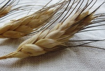 Grains - Flours/Beans/Pasta/Sprouts / How to - use them - grind them - sprout them - clean them - store them / by vicki massie