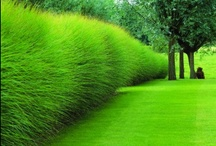 Green / Collection of beautiful gardens and outdoor environments