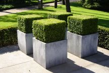 Neat | Hedges & Topiaries