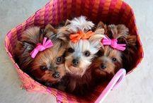 Doggiesss ;))) / Sweet!