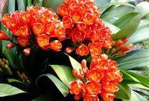 fiori / piante e fiori ornamentali