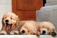 dogssss....
