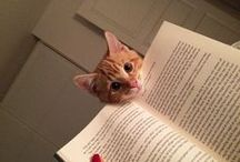 cats interrupting reading  Found on http://www.boredpanda.com/ / funny cats