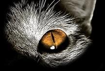 Animales Lindos / Muchos lindos animalitos...