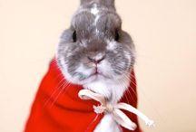 BUNNIES! / I'm a bunny mommy <3