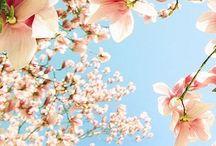 Spring   Seasonal Inspiration / ~ spring time vibes ~