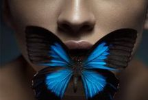 **@ THE BUTTERFLY EFFECT@** / The tender compositions of butterflies