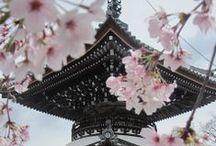 Vent d'Asie - Collection Automne-Hiver 2016/2017 / Découvrez le thème Vent d'Asie sur www.breal.net. Un esprit japonisant et une silhouette toute en douceur faite de fluidité et de drapés.