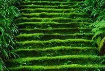 Grandioos Groen