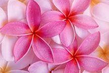 Razend Roze