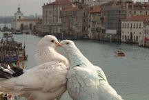 ❣️ Italia terra di Artisti Poeti e Bellezza ❣️ / Italy a land of artists, poets and mysteries