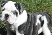 Precious Puppies!!!