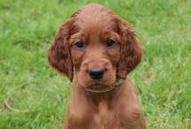 Puppies / Izzy's Pups