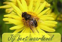 Relicards / Religieuze kaarten. Sommige kunnen als ecard verzonden worden. www.relicards.nl