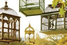 Aviary / Birds in cages, birdcages and more beautiful bird related imagery.