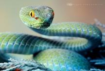 Reptilia & Amphibia
