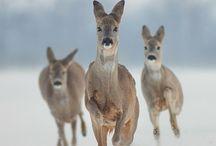 ~ oh my deer ~ / by D I N Y ➕