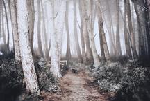 Nature - Quiet