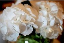 White Wedding Inspiration / Images to inspire brides planning a wedding with a white colour scheme.