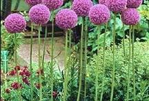 Le Jardin / Welcome to le Jardin. Enjoy ! / by Corinne Bose