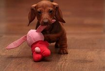 Animals - my sweet loves!