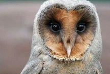 Owl / Imádom őket!